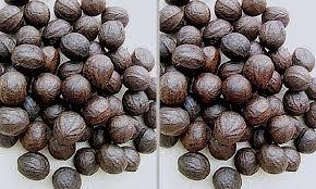 walnut 1