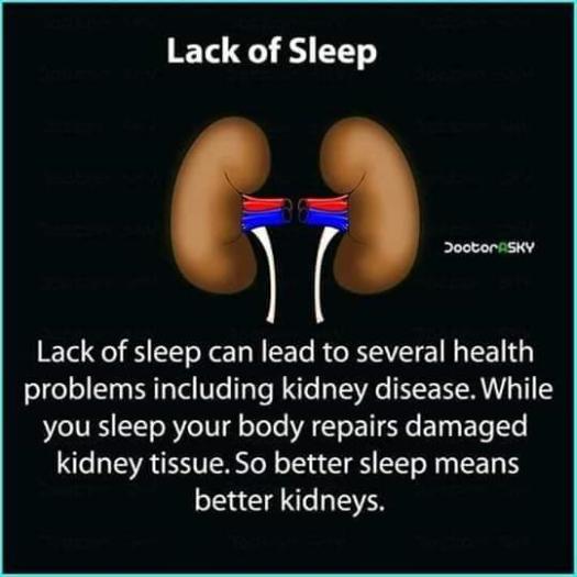 kidney 4